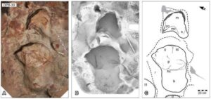 A, orthophotograph; B, ambient occlusion image; and C, schematic interpretation of UQL-DP8-30