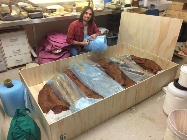 PhD student Jorgo Ristevski takes a break from fossil crocodilians to help carefully pack all the completed track replicas