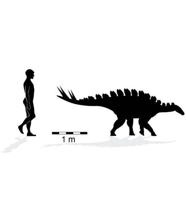 Silhouette of the Luluichnus mueckei trackmaker to scale with a person