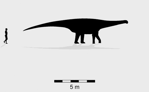 Broome sauropod morphotype D trackmaker