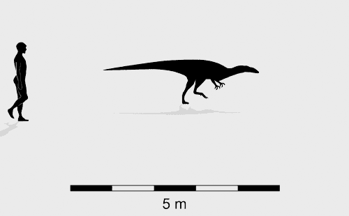 Broome theropod morphotype A trackmaker