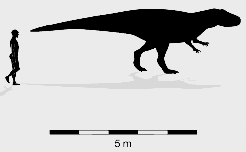 Broome theropod morphotype C trackmaker