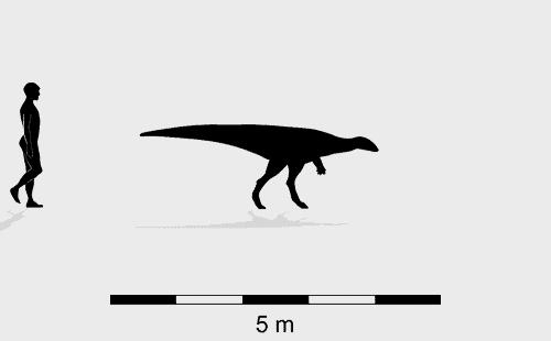 Ornithopod Wintonopus middletonae trackmaker